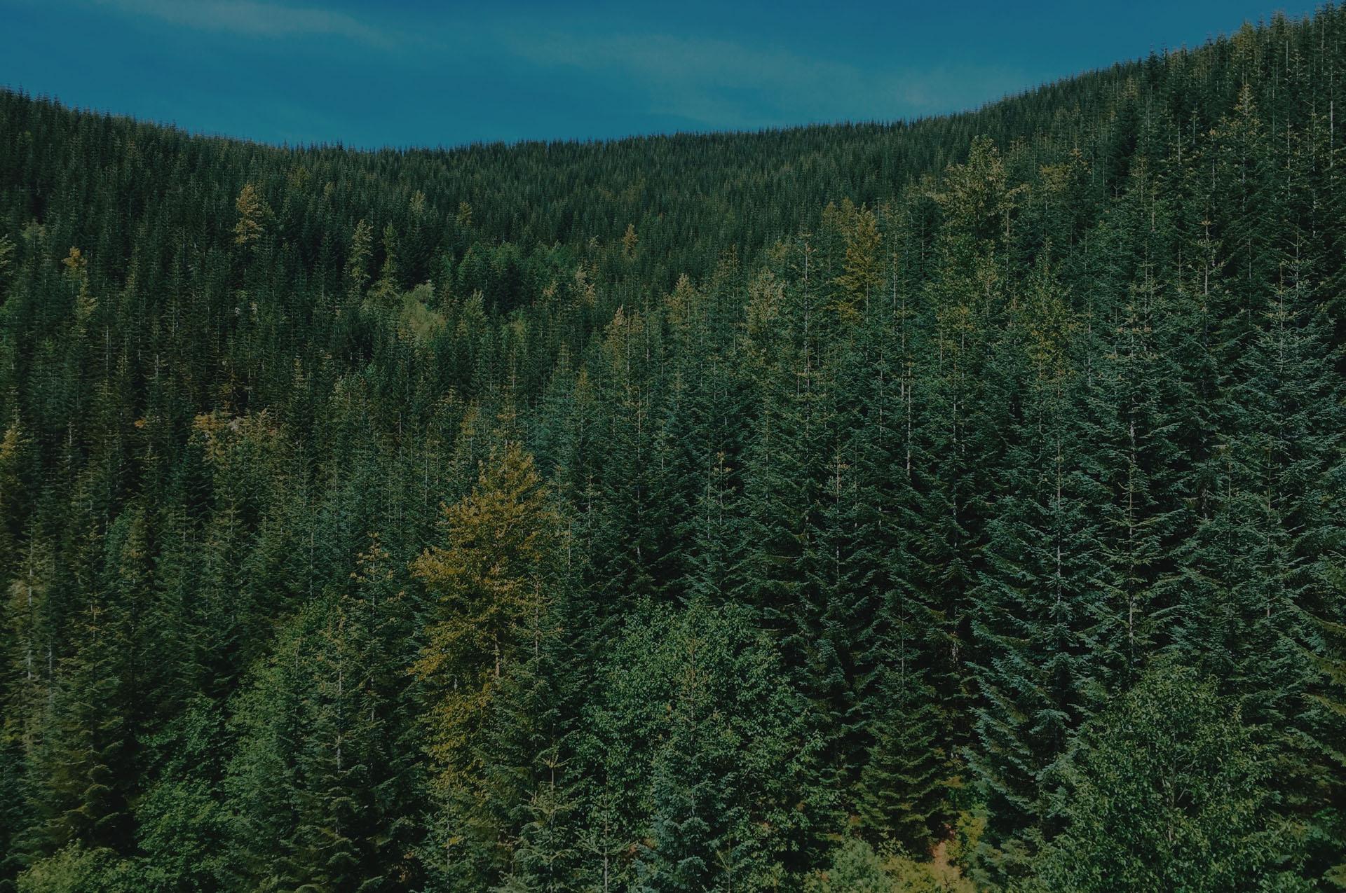 forest slide